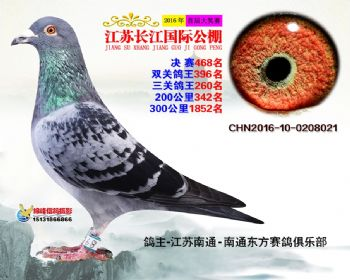 江苏长江决赛468名