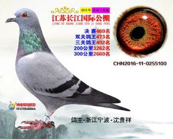 江苏长江决赛469名