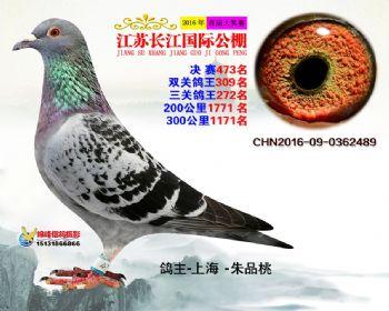 江苏长江决赛473名