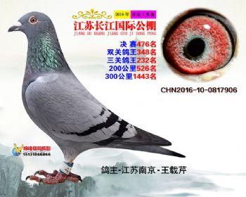 江苏长江决赛476名