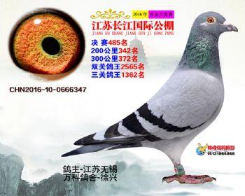 江苏长江决赛485名