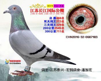 江苏长江决赛488名
