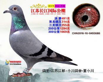 江苏长江决赛491名