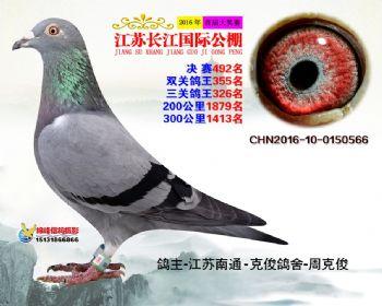 江苏长江决赛492名