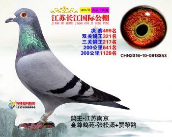 江苏长江决赛499名