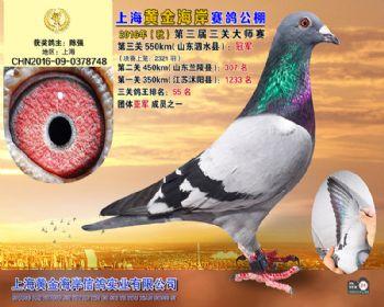 上海黄金海岸决赛冠军
