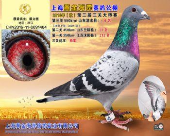 上海黄金海岸决赛第4名