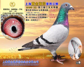 上海黄金海岸决赛第5名