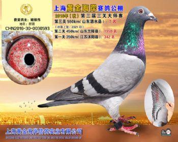 上海黄金海岸决赛第7名
