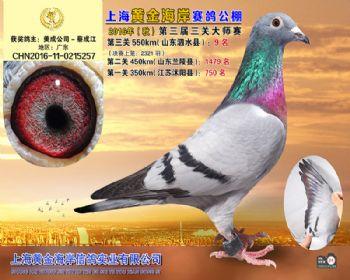 上海黄金海岸决赛第9名