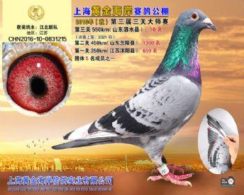 上海黄金海岸决赛第10名