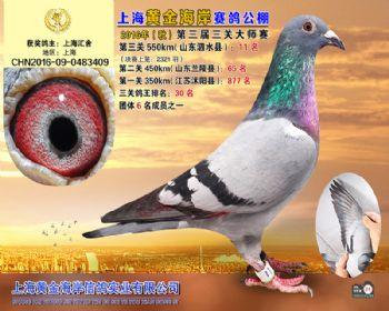上海黄金海岸决赛第11名