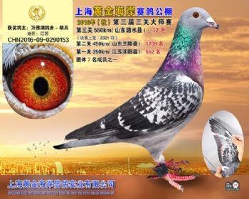 上海黄金海岸决赛第12名
