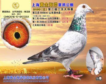 上海黄金海岸决赛第13名