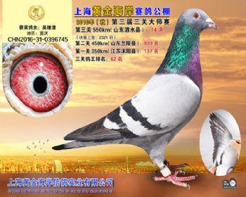 上海黄金海岸决赛第14名