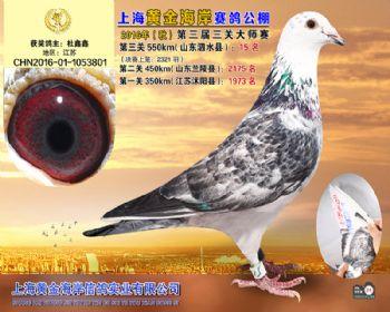 上海黄金海岸决赛第15名