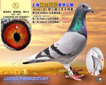 上海黄金海岸决赛第16名