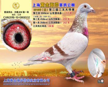 上海黄金海岸决赛第17名