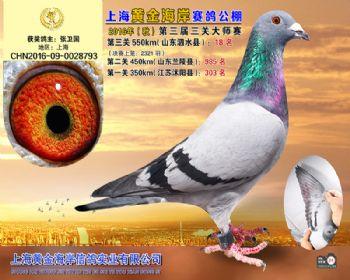 上海黄金海岸决赛第18名