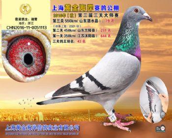 上海黄金海岸决赛第19名