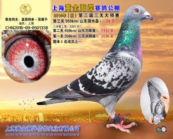 上海黄金海岸决赛第20名