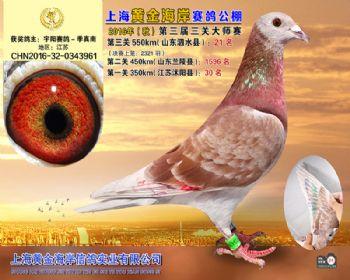 上海黄金海岸决赛第21名
