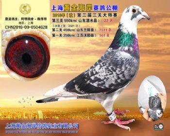 上海黄金海岸决赛第22名