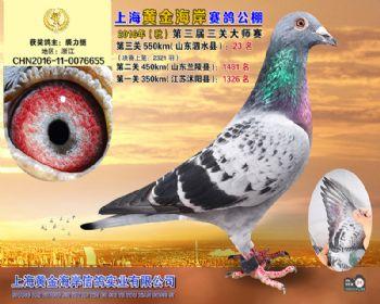 上海黄金海岸决赛第23名