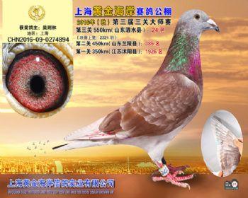上海黄金海岸决赛第24名