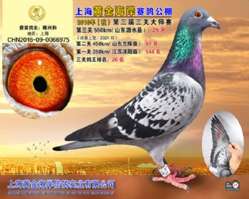 上海黄金海岸决赛第25名
