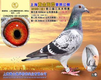 上海黄金海岸决赛第26名