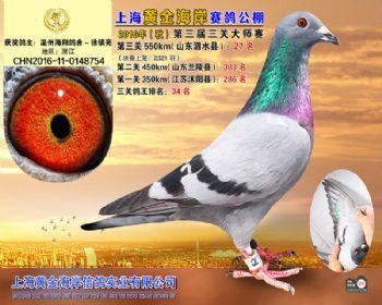 上海黄金海岸决赛第27名