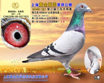 上海黄金海岸决赛第28名