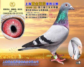 上海黄金海岸决赛第29名