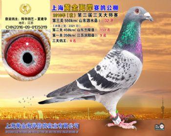 上海黄金海岸决赛第32名
