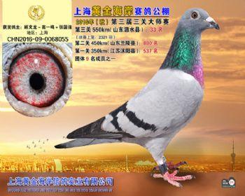 上海黄金海岸决赛第33名