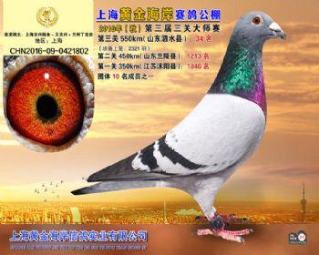 上海黄金海岸决赛第34名