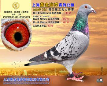 上海黄金海岸决赛第35名