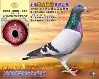 上海黄金海岸决赛第36名