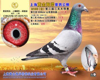 上海黄金海岸决赛第37名