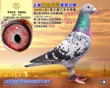 上海黄金海岸决赛第38名