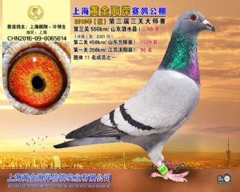 上海黄金海岸决赛第40名