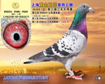 上海黄金海岸决赛第41名