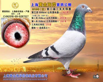 上海黄金海岸决赛第42名