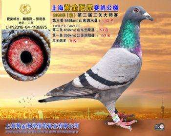 上海黄金海岸决赛第43名