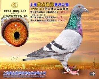 上海黄金海岸决赛第44名