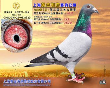 上海黄金海岸决赛第45名