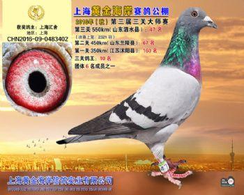 上海黄金海岸决赛第47名