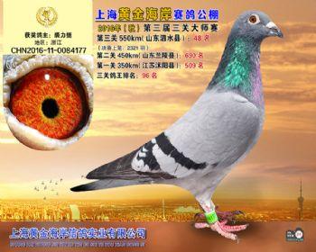 上海黄金海岸决赛第48名