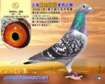 上海黄金海岸决赛第50名